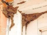杭州臨安市家庭小區住宅滅鼠白蟻防治滅蟑螂除四害