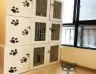 成都高新时光机猫咪宠物家庭寄养安全健康靠谱