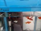 买大鱼缸送小的连鱼一起送乌龟不送