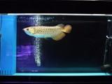 海南海口鱼缸清洗/消毒/维护/定期包月上门服务