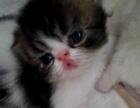 加菲猫,加菲宝宝找新家
