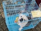 宁波宠物托运宠物空运火车汽运实体店宠物托运