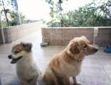 别墅宠物度假寄养训练 可接送有专用房 环境价格服务有优势