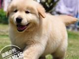 广东最大养殖宠物狗基地出售健康纯种宠物狗