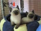 华东区最大豹猫猫舍 上海爱宠网 多只挑选