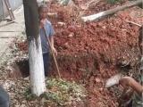 南堡开发区杉木杆厂家围栏竹竿