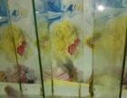 罗汉鱼亚成,金花,泰金,幻彩,古典,马骝,鸿运