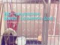 长期承接宠物寄养服务价格30!免费提供接送服务!