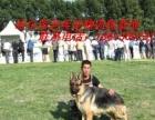 哈尔滨老兵宠物训练中心上门训犬较放心