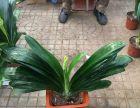 北京花卉植物批發零售