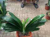 北京花卉植物批发零售