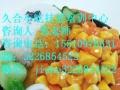 小吃培训鸡蛋灌饼酱香饼手抓饼铁板豆腐铁板饭烧烤川菜湘菜烤冷面