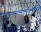 鞍山小赵宠物航空托运-猫-狗宠物托运诚信有保障