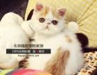出售纯种加菲猫 可送货上门