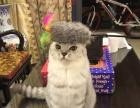 专业猫咪洗澡-只接受猫咪
