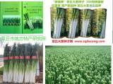 大葱种子 山东大葱种育种家种子品牌 家禄三号章丘大葱种子