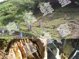 宽甸特产纯木桶野山蜂蜜