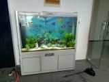 河南郑州鱼缸送货上门,清洗鱼缸安装维修,鱼病防治洗鱼缸