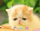 萌猫最前线猫舍 猫咪出售中