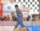 中国登陆冠军柴犬后代血统证书可查询