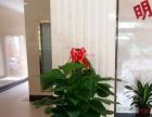 南宁植物盆栽批发、室内外绿植养护园林 养护