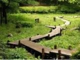 上千园林园林地被植物咨询策划市场前景广阔,值得您的信任