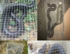 捕蛇笼怎么做哪里有蛇笼制作技巧捕蛇笼使用教程笼中笼
