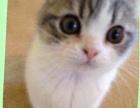 将一只折耳猫给好心人