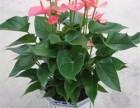 绿植盆栽销售,办公室绿植租赁,花卉绿植养护