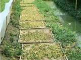 枝江市匯澤青蛙養殖打破傳統零偏見