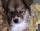 寻找走失的三个月小狗,望好心人提供线索,找回必重谢