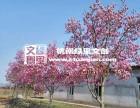 阳春三月花海行