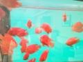 专业清洗鱼缸 鱼缸长期维护 鱼缸搬家
