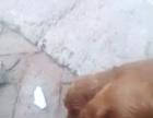 家有可卡犬家有可卡犬