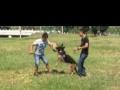 工作犬,家庭犬培训,寄养,出售各类萌犬