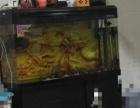 出售鱼缸便宜出!