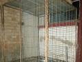 自家焊接的狗笼,结实原来养活阿拉斯加