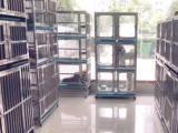 专业宠物寄养 可远程监控,签合同,空调开放正规
