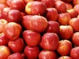 莞香江南水果市场