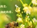 有钱难买真蜂蜜,就来尝尝河南蜜之缘的蜂蜜吧