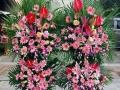 玫瑰 百合鲜花批发 鲜花预定 优惠多多