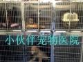 太原市最专业的一站式宠物医院 小伙伴宠物医院