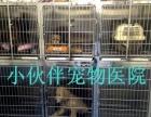 太原市较专业的一站式宠物医院 小伙伴宠物医院