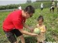 京南农场,租地种地,爸爸去哪