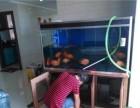 昆明专业鱼缸护理水草造景鱼缸清洗鱼类出售上门服务