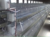 供应优质蛋鸡笼,养殖专用鸡笼,镀锌鸡笼,阶梯式鸡笼