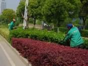 甩卖花卉租摆绿植租摆养护_优质江西生态农业小程序花卉批发价格
