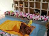 廣州念寵寵物殯葬,專車接送,視頻直播現場觀看