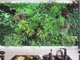 长沙雨林缸 鱼缸 植物墙软装 庭院设计施工找 植来植趣