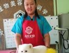 宠物美容 沈阳宠物美容师培训学校